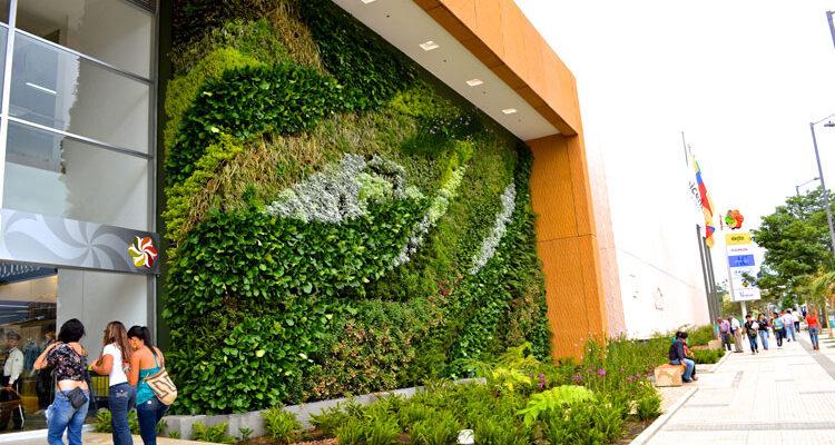 plantas-para-jardines-verticales
